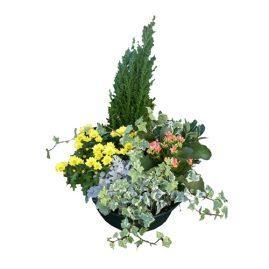 coup de plantes