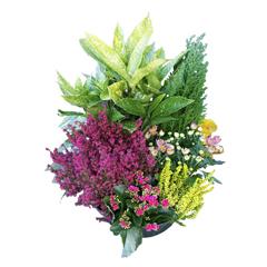 fleurs pour deuil