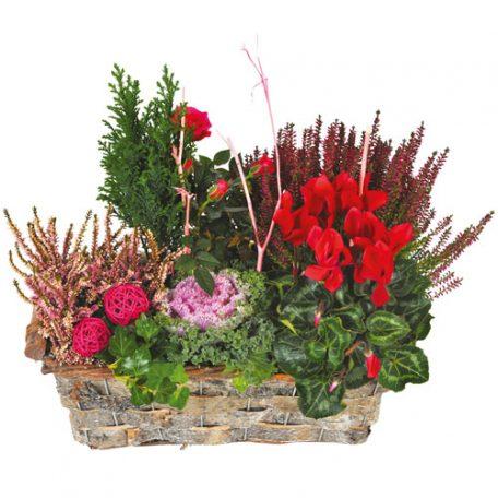 livraison de plantes dans les cimétières et églises sur nancy