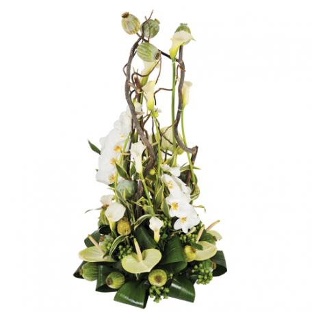 arum , orchidées et anthium